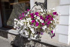 I balconi hanno allineato con i fiori sboccianti, Livigno, Italia Fotografia Stock Libera da Diritti