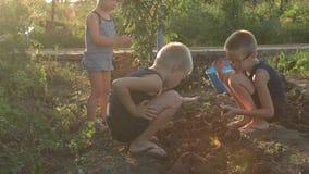 I bambini del villaggio scavano in terra con le loro mani sul giardino con cui la ragazza agricola del potatSlender scava la pata stock footage