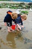 I bambini esplorano le pozze di marea con il secchio rosso fotografie stock