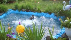 I bambini nuotano in un piccolo lago un giorno di estate caldo Giardino, fiori e piante intorno al lago Infanzia felice video d archivio