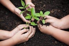 I bambini passa la piantatura dell'albero giovane su suolo nero insieme immagini stock
