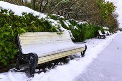 I banchi e gli arbusti coniferi sotto neve lungo il vicolo in città parcheggiano il giorno di inverno nuvoloso Fotografie Stock Libere da Diritti