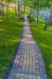 I banchi vicino ad un percorso stretto hanno allineato con le mattonelle in un parco verde piantato dalle betulle Immagine Stock
