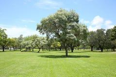 I bei alberi ed erba alla festa parcheggiano in Fort Lauderdale Immagine Stock Libera da Diritti