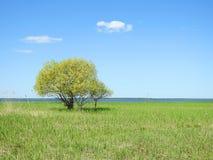 I bei alberi verdi si avvicinano al lago, Lituania Fotografie Stock
