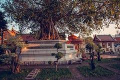 I bei bonsai fanno il giardinaggio nel tempio di Wat Pho Bangkok, Tailandia Fotografia Stock