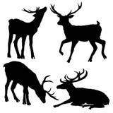 I bei cervi Sika fieri nobili sono cervide in famiglia del mammifero del ruminante Vista laterale Immagine disegnata a mano dell' illustrazione di stock