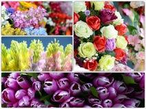 I bei colori di plastica fiorisce la raccolta Fotografia Stock