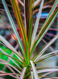 I bei e fiori variopinti Fotografie Stock