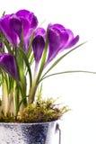 I bei fiori della sorgente di arte hanno isolato la priorità bassa Immagini Stock