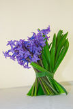 I bei, fiori fragranti annunciano la molla Immagini Stock Libere da Diritti