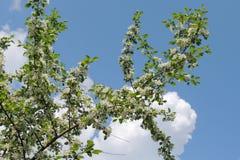 I bei fiori rendono ai vostri occhi i colori luminosi Fotografia Stock Libera da Diritti