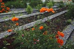 I bei fiori rossi fioriscono in mezzo dei campi nei colori pastelli Fotografia Stock Libera da Diritti