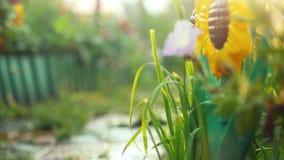 I bei fiori variopinti di estate fanno il giardinaggio al rallentatore con gli effetti del chiarore del lense e del sole 1920x108 archivi video