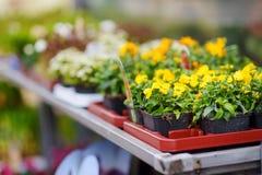 I bei fiori variopinti hanno venduto nel negozio di fiore all'aperto Immagine Stock Libera da Diritti