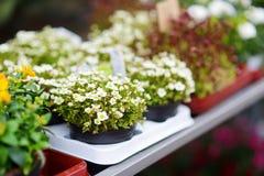 I bei fiori variopinti hanno venduto nel negozio di fiore all'aperto Fotografia Stock Libera da Diritti