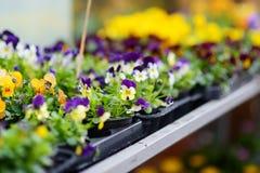 I bei fiori variopinti hanno venduto nel negozio di fiore all'aperto Immagini Stock