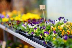I bei fiori variopinti hanno venduto nel negozio di fiore all'aperto Immagine Stock