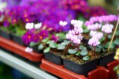 I bei fiori variopinti hanno venduto nel negozio di fiore all'aperto Fotografie Stock Libere da Diritti