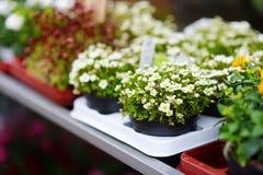 I bei fiori variopinti hanno venduto nel negozio di fiore all'aperto Fotografie Stock