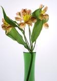 I bei gigli rosa fiorisce in vaso, su fondo bianco Fotografie Stock Libere da Diritti