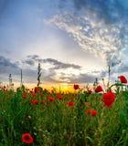 I bei papaveri rossi sistemano la vista panoramica dell'alba, l'Alsazia, Fran Fotografia Stock
