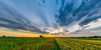 I bei papaveri rossi sistemano la vista panoramica dell'alba, l'Alsazia, Fran Immagine Stock Libera da Diritti