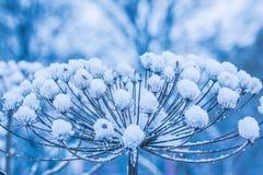 I bei precedenti minimalistic della natura di vecchia erba o erbaccia sotto la neve nel gelo freddo un il giorno nuvoloso immagini stock