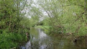 I bei scacchi del fiume in Chorleywood stock footage