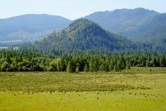 I berg av Altai Royaltyfria Bilder