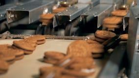 I biscotti si muovono da una catena di montaggio ad una fabbrica 4K stock footage