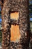 I blaze on tree Royalty Free Stock Photos