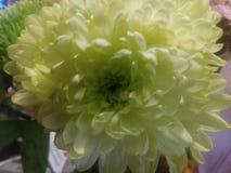 I blom royaltyfri foto