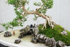 I bonsai cinesi Fotografia Stock Libera da Diritti
