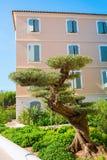 I bonsai disegnano di olivo in Saint Tropez fotografie stock
