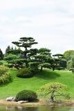 I bonsai gradiscono l'albero Immagini Stock