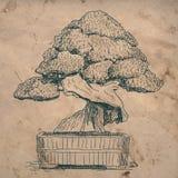 I bonsai si dirigono la pianta Immagine Stock