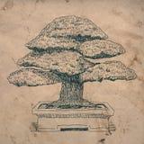 I bonsai si dirigono la pianta Immagini Stock Libere da Diritti