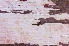I bordi di legno anziani hanno muffa immagini stock