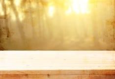 I bordi e gli ambiti di provenienza di legno della natura dell'estate si accendono fra gli alberi Fotografia Stock