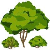 I boschetti verdi su fondo bianco è isolato illustrazione vettoriale