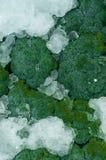 I broccoli verdi freschi hanno imballato con GHIACCIO nel packa del trasporto Fotografia Stock