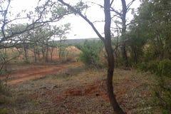 I busken Arkivfoto