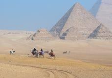 I cammelli si avvicinano alle piramidi di Giza Fotografia Stock