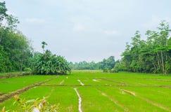 I campi agricoli nello Sri Lanka immagine stock libera da diritti