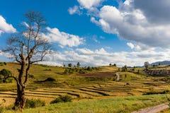 I campi hanno abbellito lo Stato Shan Myanmar Fotografia Stock Libera da Diritti