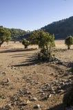 I campi nelle montagne illuminate dal sole di mattina, i raccolti hanno raccolto nei campi Immagini Stock