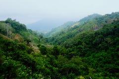 I campi rimossi indicano una volta che piantagioni della coca i militari dal distrutto da fotografia stock