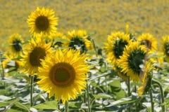 I campi rurali medi di vacanza estiva dell'Italia chiedono le colline tenere Fotografie Stock Libere da Diritti