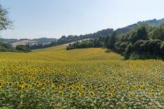 I campi rurali medi di vacanza estiva dell'Italia chiedono le colline tenere Immagini Stock